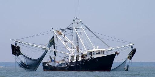 صید کیلکای دریای خزر امسال با ۷۳ فروند شناور آغاز شد