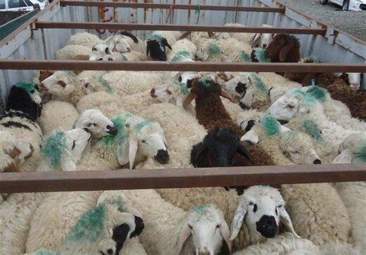 فروش هر کیلو گوشت گوسفند قاچاق در عراق ۵۰ هزار تومان سود دارد