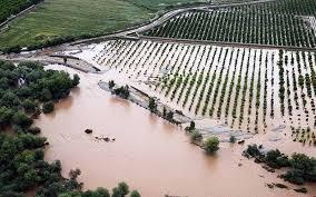 ۹۷۰ میلیارد تومان کمک بلاعوض به خسارت دیدگان بخش کشاورزی پرداخت می شود