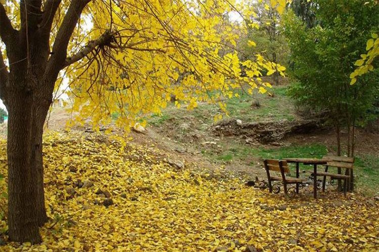 بهترین پارک های تهران برای پیک نیک کدامند؟