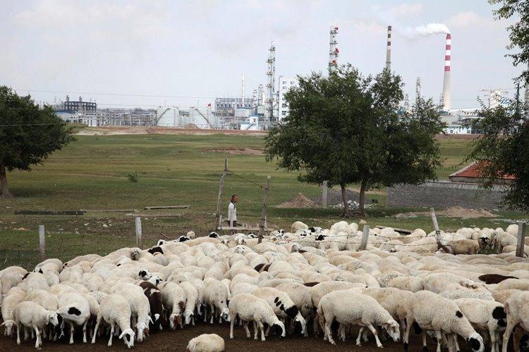 شناسایی یک مورد ابتلا به طاعون خیارکی در شمال چین