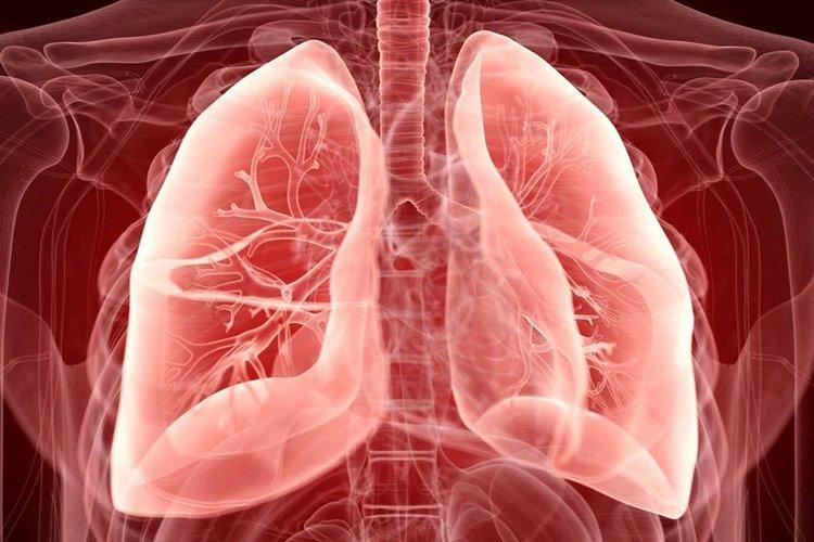 ترمیم ریههای آسیبدیده انسان با اتصال آنها به خوکها