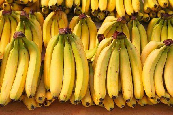 سرمایه گذاری کافی برای تولید میوه های گرمسیری نشده است