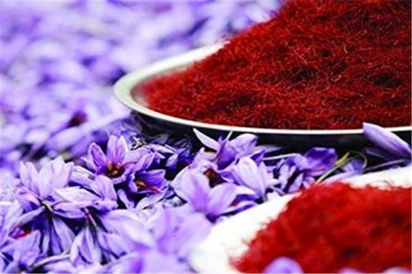 ۹۳ درصد صادرات زعفران بصورت خام است/ قیمت صادراتی ۷۵ درصد کاهش یافت/ الزام تایید اهلیت صادرکنندگان