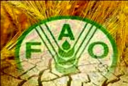 اختصاص ۳۹۵ هزار دلار از اعتبارات فائو به پروژه مدیریت سیل