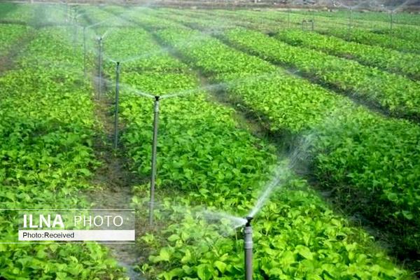 برآورد تولید ۲۷ میلیون تن سبزی و صیفی در سال زراعی ۹۹-۹۸