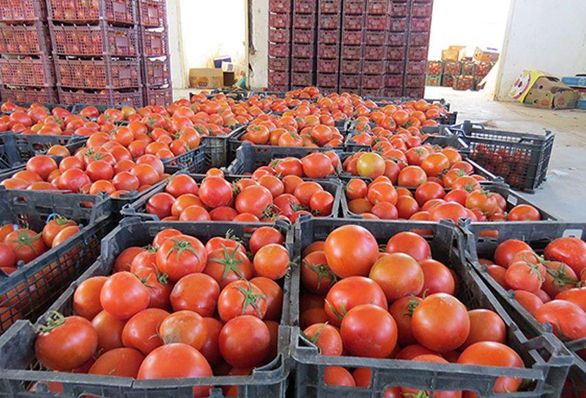 علت معطلی کامیونهای حامل گوجه فرنگی صادراتی در مرز باشماق