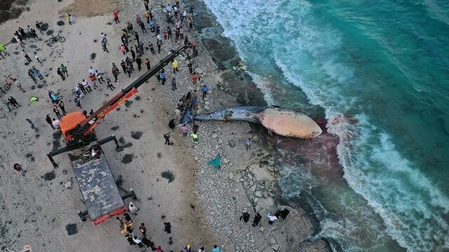 خودکشی نهنگها و دست خالی ما برای ابزار تحقیقاتی