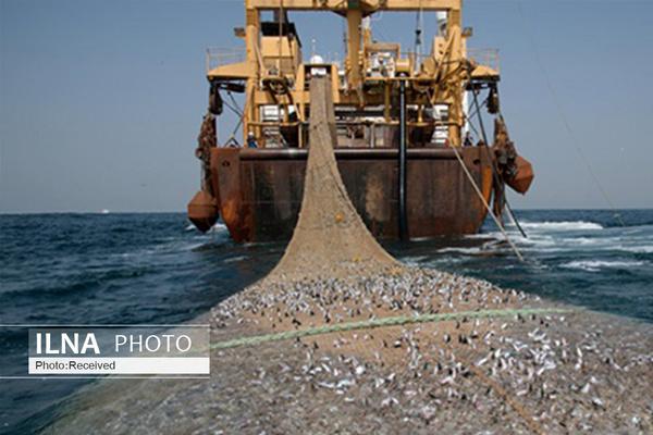 انتقاد صیادان اروندکنار از نحوه اجرای طرح ممنوعیت صید ترال ماهیان/ شیلات بهجای لغو مجوز متخلفان مجوز همه صیادان را لغو میکند