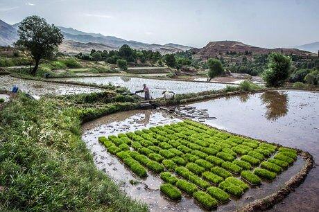 بررسی لایحه «اصلاح قانون حفظ کاربری اراضی زراعی و باغ ها» در دولت