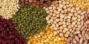 قیمت انواع حبوبات در میادین میوه و تره بار