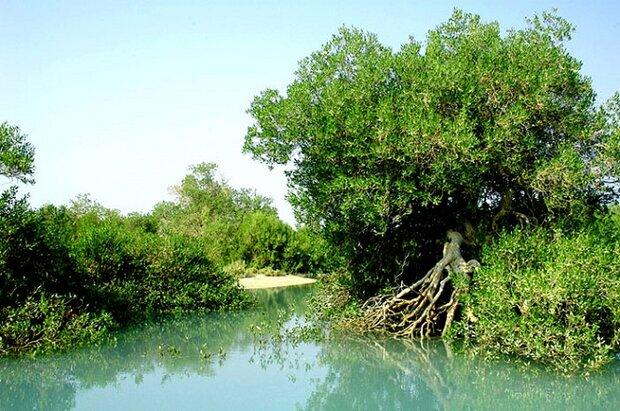 طرح های مجاور جنگل های حرا باید تاییدیه زیست محیطی داشته باشند