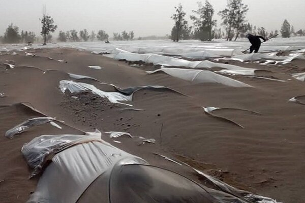 وزیر کشاورزی محرومان جنوب را ندید/ مزارع زیر شن مدفون شدند