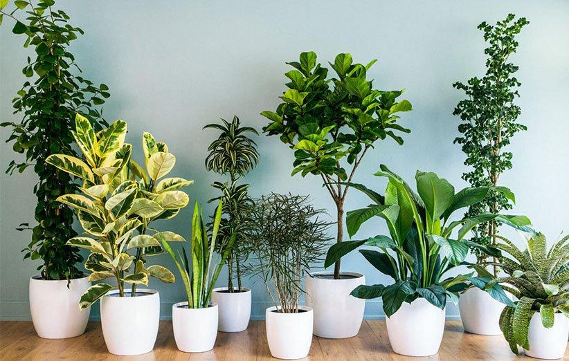 ۱۴ گیاه آپارتمانی مقاوم، برای نگهداری در فضاهای کم نور