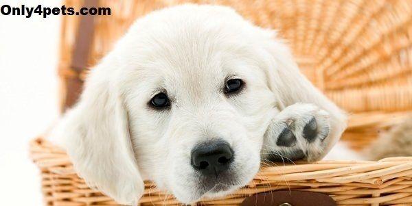 بهترین سایتهای فروش سگ و توله سگ در ایران و جهان