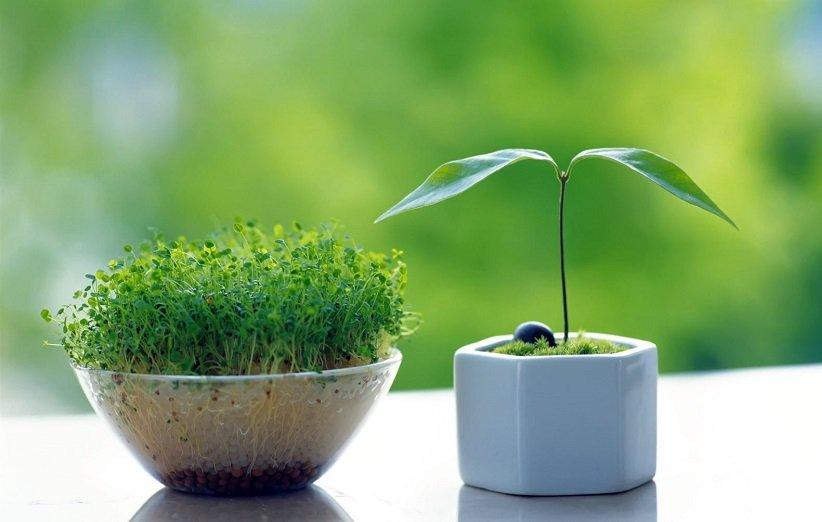 راهنمای کامل کاشت سبزهی عید نوروز با انواع بذرها