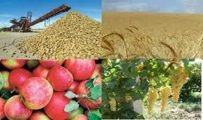 نظارت ۱۰۰پست قرنطینه ای بر واردات و صادرات محصولات کشاورزی
