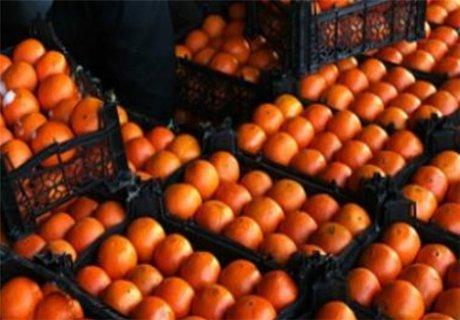قیمت پرتقال در باغ  ٢٠٠٠ تومان؛ در بازار۲۰ هزار تومان!