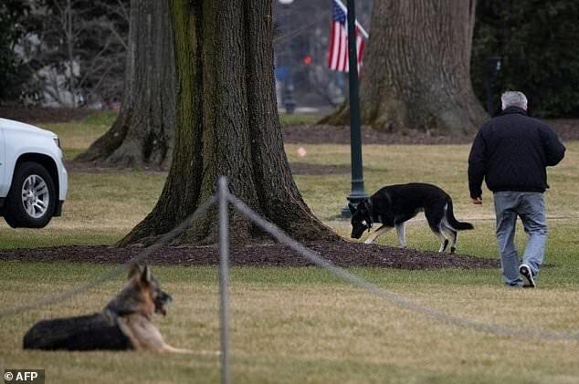 سگهای بایدن از کاخ سفید رفتند