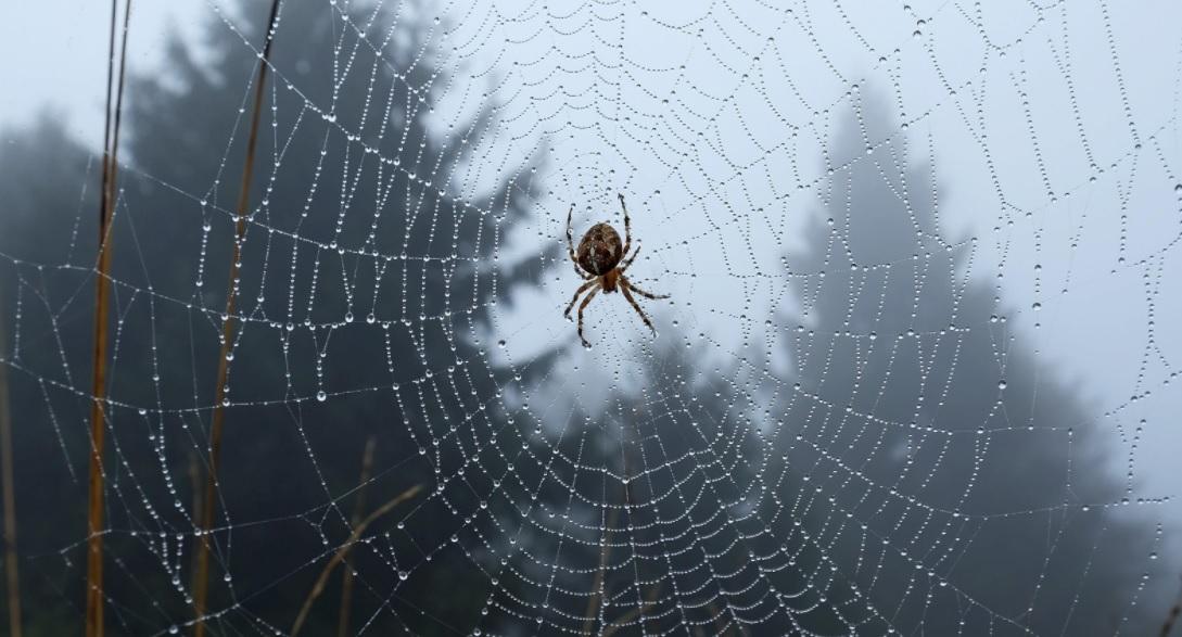 محققان دانشگاه MIT میخواهند با عنکبوتها صحبت کنند