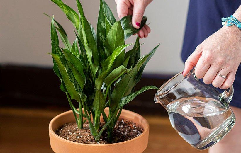 ۲۴ گیاه آپارتمانی مقاوم که نگهداری از آنها آسان است