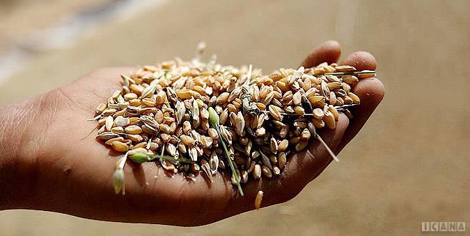 بخش دولتی خواستار عدم اصلاح قیمت خرید تضمینی محصولات کشاورزی است