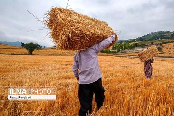 تعیین قیمت گندم بار دیگر به تعویق افتاد