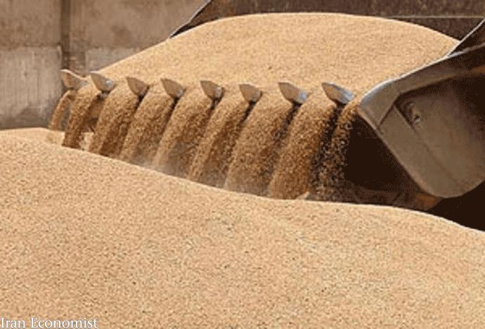 دولت گندم را 23 درصد از نرخ جهانی گرانتر خرید