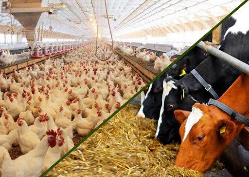 موارد مربوط به نهادهها را از وزارت کشاورزی پیگیری کنید