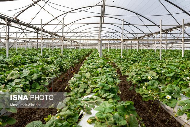 تسهیل کشت گلخانهای در استانهای کم آب