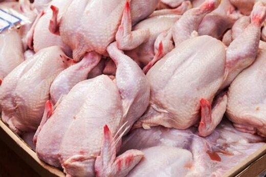 توزیع مرغ آغاز شد