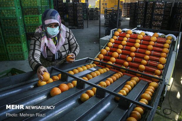 صادرات هوایی محصولات کشاورزی با سوخت یارانهای