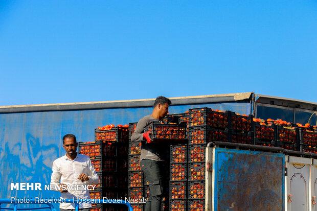 امکان صادرات گوجهفرنگی به عراق فراهم شد