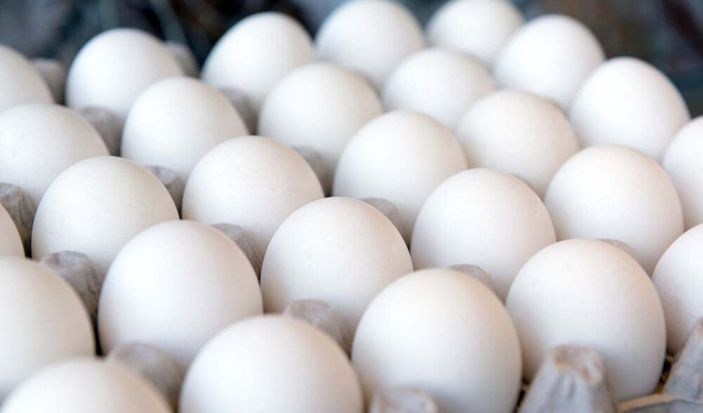 کاهش دوباره قیمت تخم مرغ