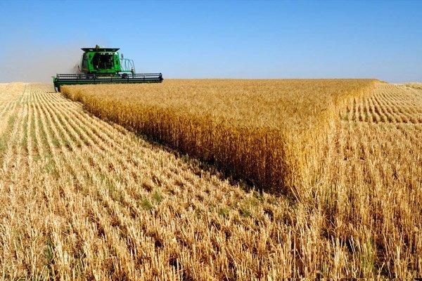 قیمت خرید تضمینی گندم باید افزایش پیدا کند