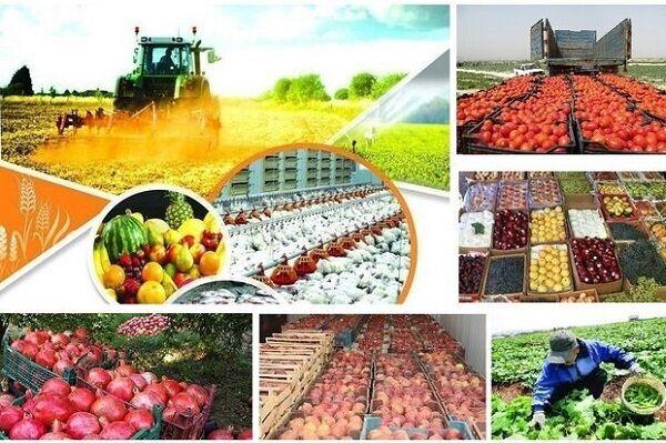 برنامه دیجی بازار روستایی با هدف درآمدزایی برای کشاورزان