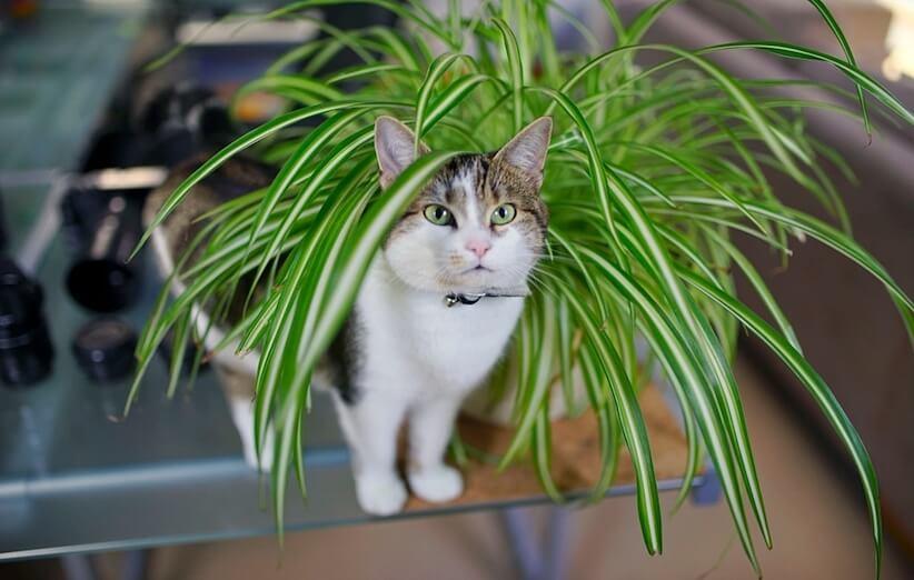 ۱۰ گیاه آپارتمانی غیرسمی که دوست حیوانات خانگی هستند