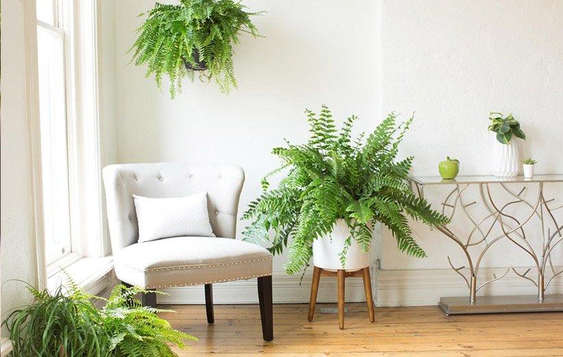 ۱۰ گیاهان آپارتمانی آویز که زیبایی خانهی شما را دو برابر میکنند