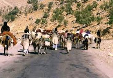پیشنهاد تشکیل شورای ملی برای ساماندهی کوچ