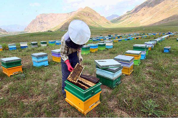 پیشنهاد اختصاص ۵۸۵۰ میلیارد تومان اعتبار برای پیشگیری از اثرات خشکسالی بر زنبورداری
