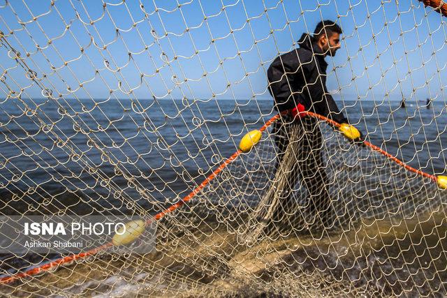 علت کاهش ذخایر ماهی کیلکا