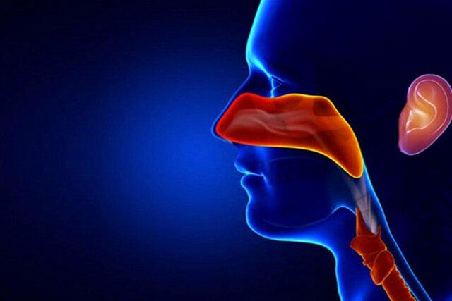 بررسی خدمات متخصص گوش حلق و بینی