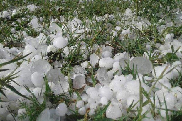 خسارت سنگین تگرگ به ۶۸۰۰ هکتار از باغات و زمینهای زراعی اهر
