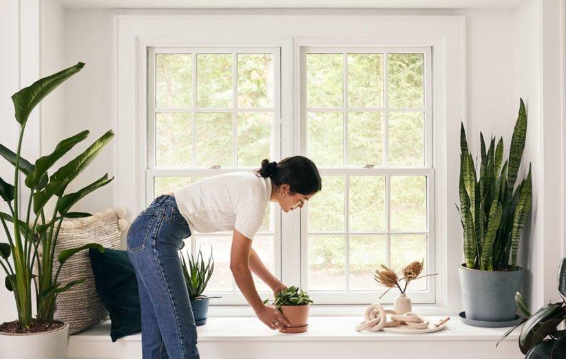 ۱۲ گیاه آپارتمانی که هر کسی میتواند پرورش دهد