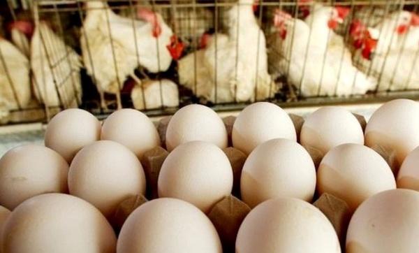تخم مرغ گران نشده است/ بعد از ۳ ماه زیان مرغداران به قیمت مصوب رسیدیم/ پیشبینی بازار ملتهب برای ماههای آینده
