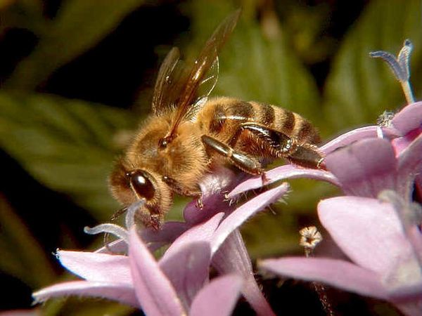 معرفی زنبورعسل به عنوان «نهاده زنده» بخش کشاورزی/صادرات ۴۰۰ گرم زهر زنبور به گرجستان/ تلفات زنبورها همچنان ادامه دارد