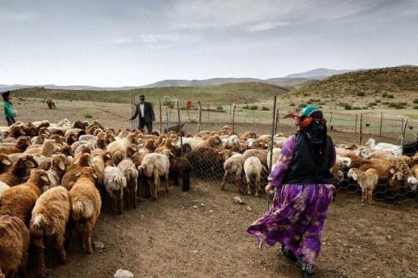 کسری ۱.۶ میلیون تنی علوفه مراتع عشایر/ حداقل ۱۲۰ هزار تن نیاز ماهانه نهاده دامی در کشور