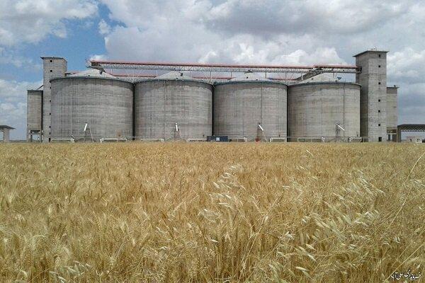 ماهانه ۱۲ هزار تن گندم در استان مرکزی مصرف میشود