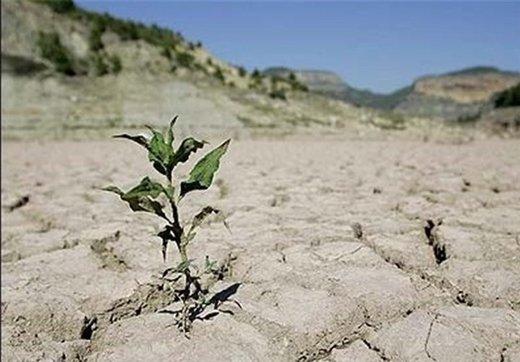 کشت محصولات کشاورزی زیر دریا/ راهکار دانشمندان برای کمبود آب در جهان