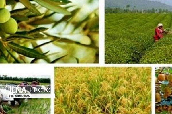 رایزن کشاورزی، نباید نقش پیغامگیر را ایفا کند/ وزارت خارجه انتخاب رایزن را به عهده نهادهای مرتبط بگذارد